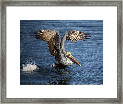 Take Off Framed Print by Paulette Thomas