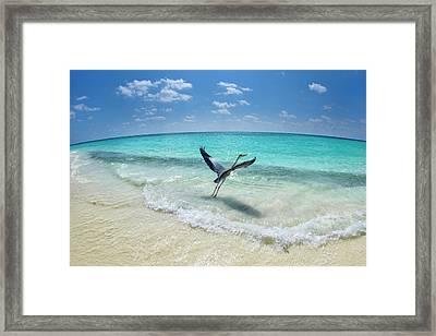 Take-off Framed Print