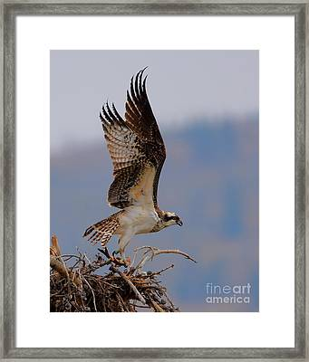 Take Out Framed Print