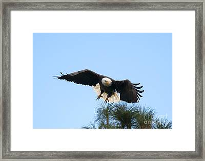 Take To The Air Framed Print