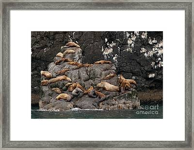 Takin' It Easy Framed Print