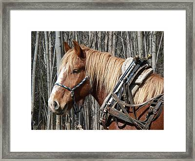 Taking A Break Framed Print