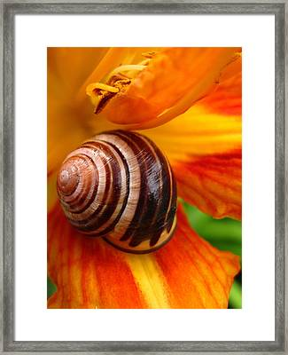 Framed Print featuring the photograph Taking A Break by Mary Bedy