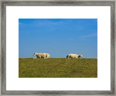 Taking A Break Framed Print by Peter Lloyd