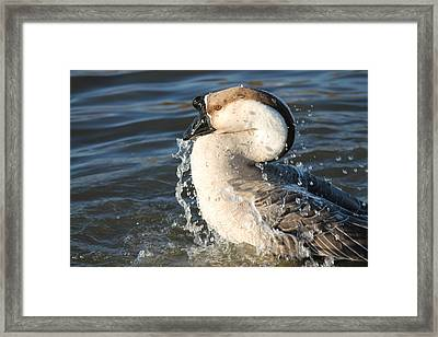 Taking A Dip Framed Print by Lorri Crossno