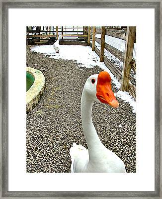 Taking A Gander... Framed Print by Julie Dant