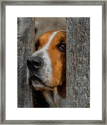 Taking A Look Around Framed Print