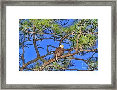 Taking A Nest Break Framed Print by Deborah Benoit