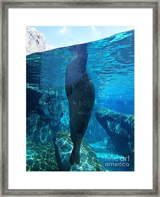 Taking A Peek Framed Print by Luther Fine Art