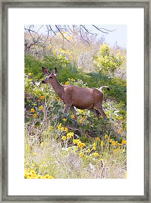 Taking A Stroll In The Country Framed Print by Athena Mckinzie