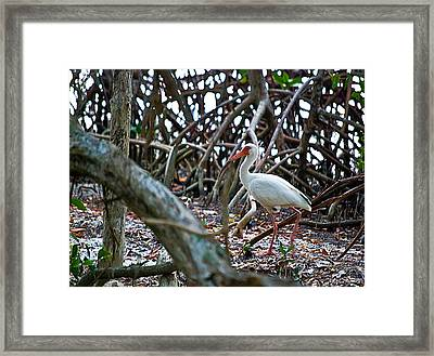 Taking A Stroll Wil 335 Framed Print