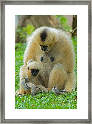 Taking Care Of Junior Framed Print by Ashley Vincent
