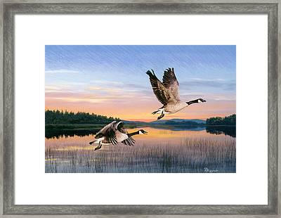 Taking Flight Framed Print by Brent Ander