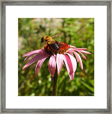 Framed Print featuring the photograph Taking Flight by Deborah Fay