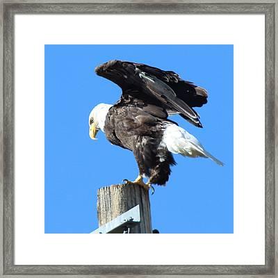 Taking Flight Framed Print by Jeff Nelson