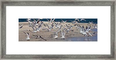Taking Flight Framed Print by Jon Neidert