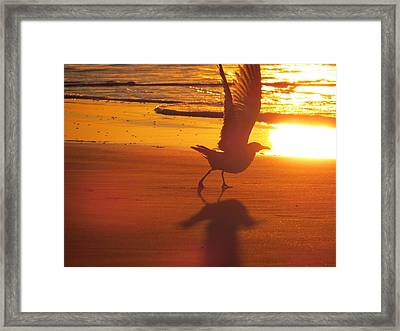 Framed Print featuring the photograph Taking Flight by Nikki McInnes
