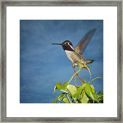 Framed Print featuring the photograph Taking Flight by Peggy Hughes