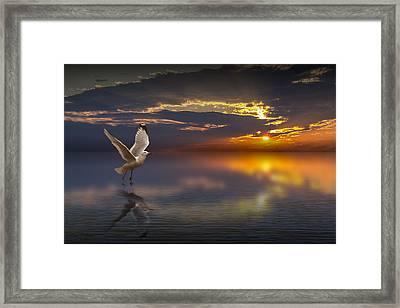 Taking Flight Framed Print by Randall Nyhof