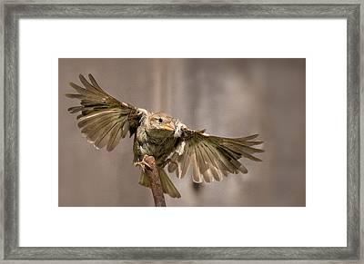 Taking Flight Framed Print by Rick Barnard