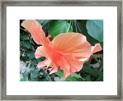 Taking Flight Framed Print