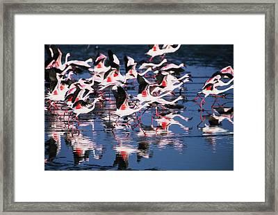 Taking Flight Framed Print by Stefan Carpenter