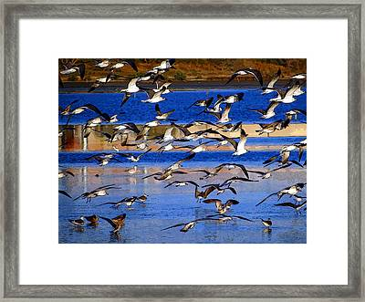Framed Print featuring the photograph Taking Flight by Tom DiFrancesca