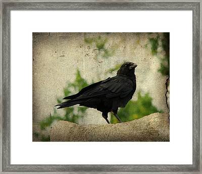 Taking It All In Framed Print by Gothicrow Images