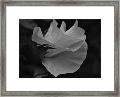 Taking It All In Framed Print by Tara Miller
