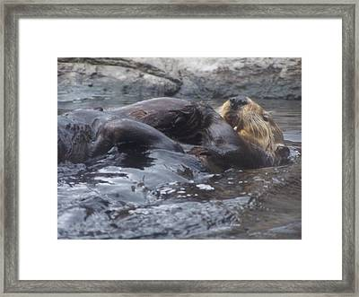Framed Print featuring the photograph Taking It Easy by Christine Drake
