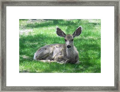 Taking It Easy Framed Print by Sheri Keith