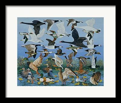 Baby Geese Paintings Framed Prints