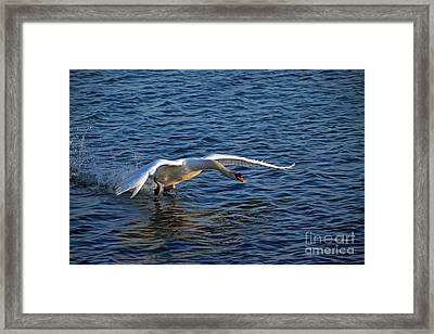 Taking Off Framed Print by Charline Xia