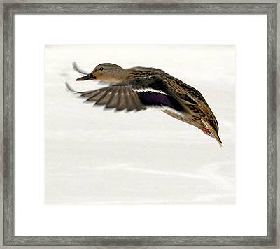 Taking Off Framed Print by John Telfer