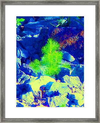 Framed Print featuring the photograph Taking Root by Ann Johndro-Collins