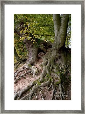 Taking Root Framed Print by Heiko Koehrer-Wagner