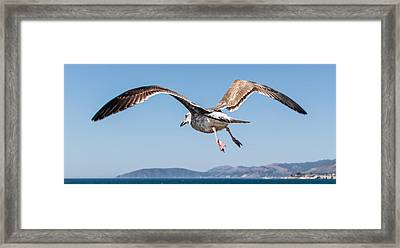 Taking To The Sky Framed Print by Ian McMorran