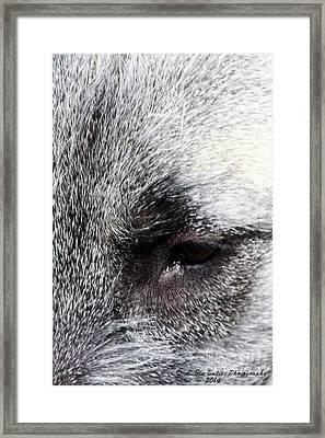 Tala's View Framed Print by Ann Butler