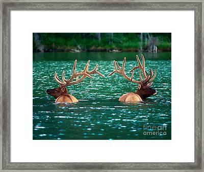 Talbot Lake Elk Framed Print by Terry Elniski