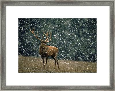 Tale Of March Framed Print by Janos Vajda Photograph Art