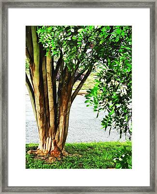 Tales From My Secret Garden Framed Print by Wendy J St Christopher