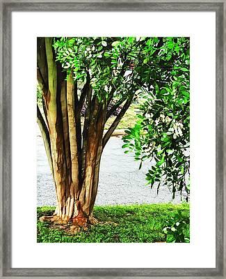 Tales From My Secret Garden Framed Print