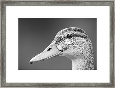 Talk Like A Duck Framed Print