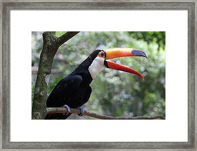 Talkative Toucan Framed Print