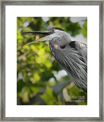 Framed Print featuring the photograph Talking Heron by Anita Oakley