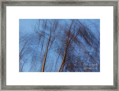 Talking Trees Framed Print