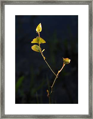 Framed Print featuring the photograph Tall And Proud by Susan D Moody