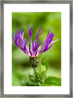 Tall And Strong Framed Print by Shell Ette