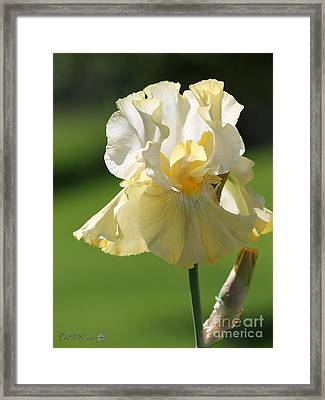 Tall Bearded Iris Named Again And Again Framed Print by J McCombie