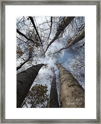 Tall Birch Circle Framed Print